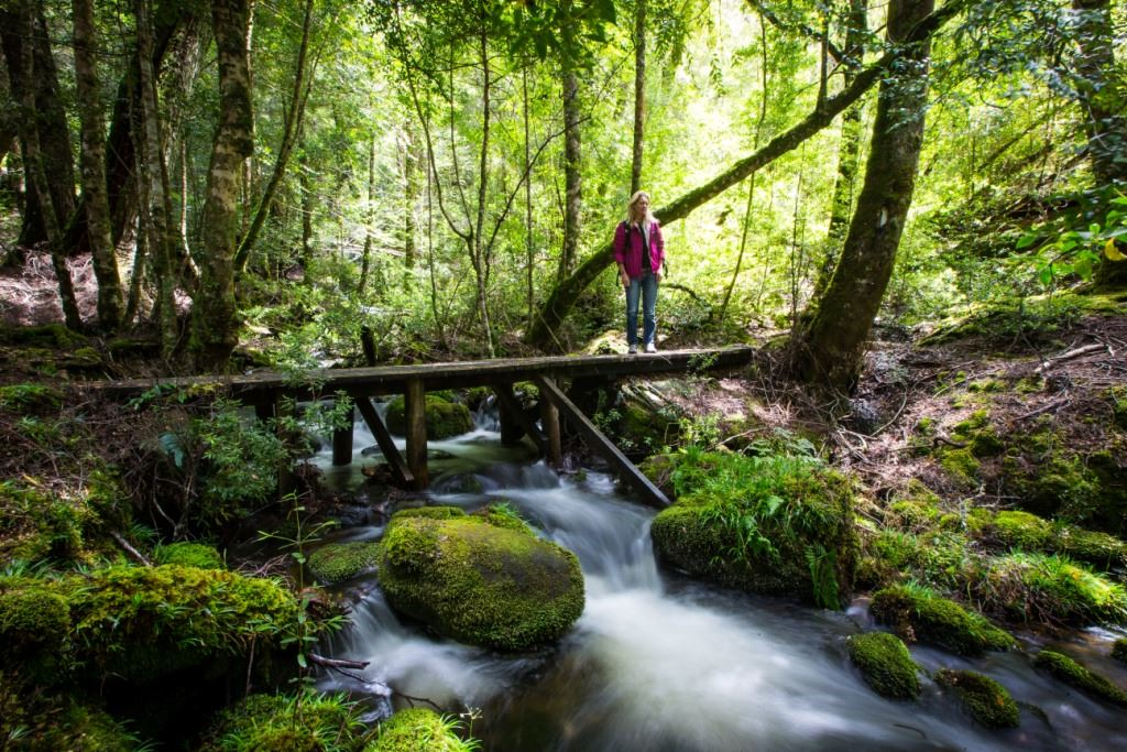 Lady standing beside rainforest stream